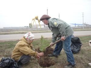 Trees Planting